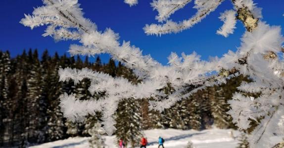 Hemmersuppen-Alm Schneeschuhwandern